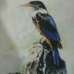 نقاشی با مداد رنگی