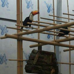 دیروز توی باغ پرندگان تهران