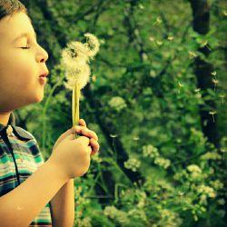 #hamrah1 #photography #art #nature #natural_environment #طبیعت #محیط_زیست #هنر #عکاسی #قاصدک