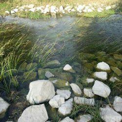 چشمه و دریاچه روبروی کاخ اردشیر بابکان. خیلی باحاله میگن صدها ساله که این در جریانه و هیشکی نمیدونه آبش از کجا میاد. میگن از پشت سدی که اون نزدیکیاست سرازیر میشه اما فکر نکنم. مگه این سد چند ساله اونجاست؟!!