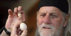 ریز ترین تخم مرغ جهان