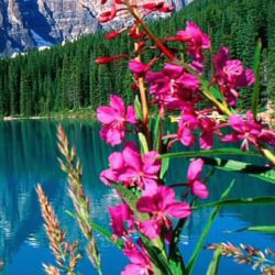 گل ومنظره زیبا