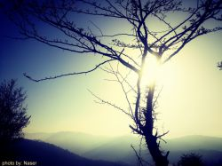روزنه آفتاب در شاخه درخت photo by:naser #gilan #hd #new# iran