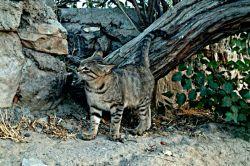 گربه بیخانمان سوز بود منم ازش چندتا عکس گرفتم