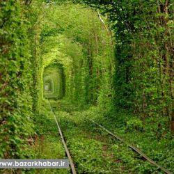تونل عشق در کشور اوکراین به طول 3 کیلومتر درجنگل