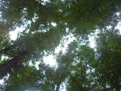 آرامش زیر سایه درخت