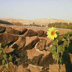 اردبیل روستای قاسم قشلاقی