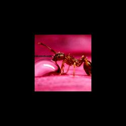 اب خوردن مورچه....