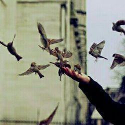 بی حرمتی به ساحت خوبان قشنگ نیست / باور کنید پاسخ آیینه سنگ نیست /سوگند می خورم به مرام پرندگان/در عرف ما سزای پریدن، تفنگ نیست #محمد سلمانی