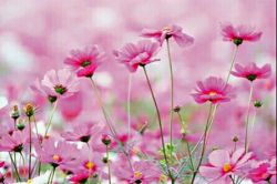 #آرامش هنر نپرداختن به انبوه مسائلیست، که حل کردنش سهم خداست... لحظه هایتان لبریز از آرامش