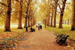 زرد است که لبریز حقایق شده است... تلخ است که با درد موافق شده است... عاشق نشدی وگرنه می فهمیدی... پاییز بهاری است که عاشق شده است.