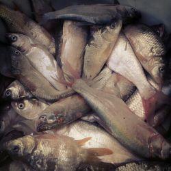 ماهی تازه، دریاچه هامون حیف که با این خشکسالی داره از بین میره