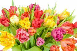 این گلها تقدیم شما دوستای گل