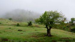 جنگل اولنگ بعد از باران ومه شدید _شاهرود