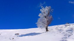 بهار 93 ارتفاعات جنگل اولنگ _شاهرود