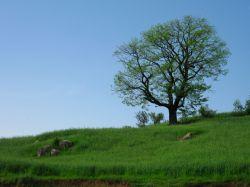 مینودشت روستای زنگلاب