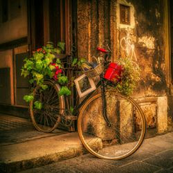 قدیما توکوچه ها انقدر دوچرخه سواری میکردیم پاهامون تا شب درد میگرفت  چقدر خاطره خوبی داشتیم این روزا دوچرخه ها گوشه حیاط خاک میخوره با ماشین بنزم میریم نه خاطره داره نه خوشی  فقط توهم چشمی مثلم باکلاسیم
