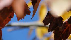 سال 91 - خزان درخت انگور
