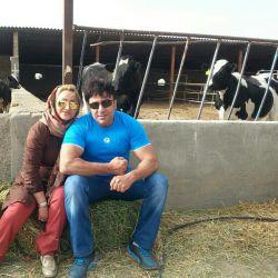 دونفر در میان گاوها