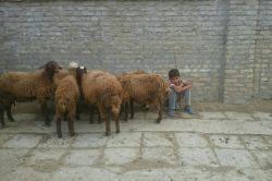 فروشنده خرده پا گوسفند در گمیشان!!!!!