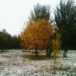 محیط دانشگاهمون بعد بارش برف و بارون
