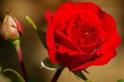 زندگی باید کرد! گاه با یک گل سرخ؛ گاه با یک دل تنگ ؛ گاه با سوسوی امیدی کمرنگ ؛ زندگی باید کرد ؛ گاه باید خندید ؛ بر غمی بی پایان ؛ لحظه هایت بی غم ؛ روزگارت آرام