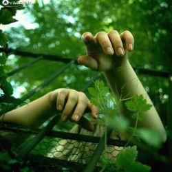 باد هم نیاید , باران هم نباشد , قاصدک ها هم همه محبوس باشند , گل ها هم همه خشک شوند , باز خاطرات نمی خشکد ! نه باران می خواهد و نه آفتاب ... مدام ریشه می دواند ...