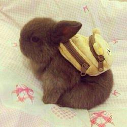 چیه؟ ندیدی خرگوش بره مدرسه؟