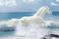 توکه باشی حال من خوبه.توکه باشی همه چی تو این دنیا واسه من ارومه.کنارتواوج میگیرم.مثل اسب سفیدقصه هاخوشبخت.خوشبختم