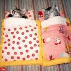 آرامش خواب گربه!