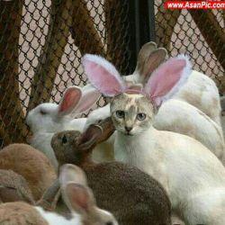 گربه ی خرگوشی!!