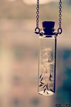 امروز آرزویم را در گوش قاصدک خواندم به باد سپردم قبل از اینکه چون قبلی ها خودش بر باد روند...