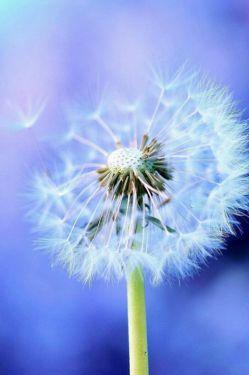 چقدر سخت است دلتنگ قاصدک بودن...در جاده ای که بادی نمی وزد!!!