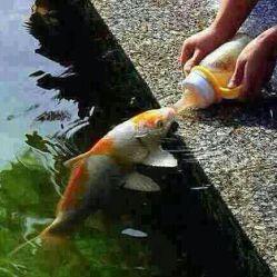 رفته بودم سر حوض ،تا ببینم شاید، عكس تنهایی خود را در آب، آب در حوض نبود ،ماهیان می  گفتند : تو  اگر در تپش باغ خدا را دیدی ،همت كن ،و بگو ماهی ها حوضشان بی آب است.