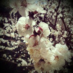 بوی بهار