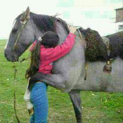 اسب مهربون