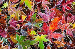 وفتی برگای پاییزو زیر پات لگد میکنی یادت باشه اونا یک روزی بهت نفس هدیه میکردن . . .