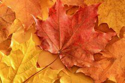 برگ پاییزی راهی جز سقوط ندارد  وقتی میداند درخت,عشق برگ تازه ای در سر دارد. . .