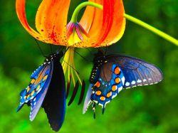 این گل و دوتا پروانه هاش تقدیم به همسر خوبم