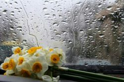 گفتم: دلم گرفته و ابرهای اندوهش سیل آسا می بارد. آیا نمی خواهی با آمدنت پایان خوشی بر دلتنگیم باشی؟.....کامنت لطفا
