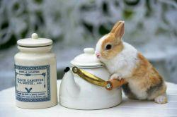 خب چیه مگه ...چای میخواد !!!