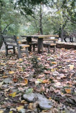 پارک محله مون #پارک#جنگلی