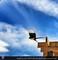 از: امیرحسین بهشتی