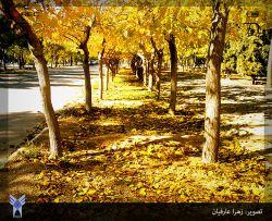 از: زهرا عارفیان
