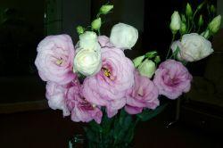 این گل تقدیم به دوستان عزیزم شما هم تقدیمش کنین به دوستانتون !