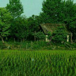 رودسر -حسن سرا -روستای سالو محله