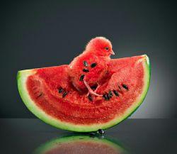 #یلدا تون پیشاپیش مبارک... جشنواره یلدای پدیده اطلاعات بیشتر در : http://www.padidehshop.com/news/view/23