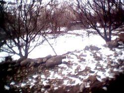 تصاویر روستای كله نو