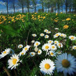 تک تک این گلها تقدیم به همه دوستانم پیشاپیش عیدتون مبارک