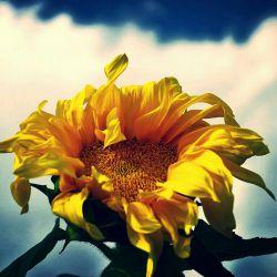 امیدوارم با غروب خورشیدماه صفرهرآنچه قلب نازنینتان رامی آزارد غروب كند وشادی ربیع برشما طلوع كند وهرگز پایانی برآن نباشد.امین